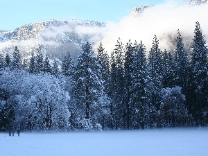 trees, snow, Mountains, Fog, viewes, Frost