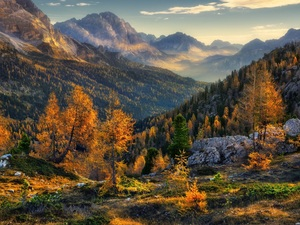 autumn, Alps, Stones, Dolomites, Italy, Mountains, Spruces