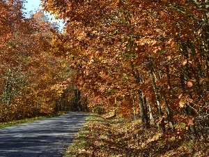 oak, Forest, ##, autumn, road