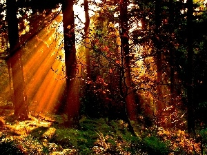 rays of the Sun, autumn, viewes, forest, trees