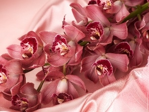 Orchidee, satin, Pink