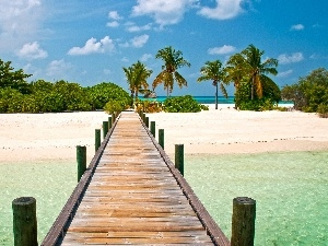 sea, Beaches, Palms, pier