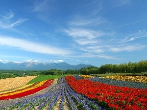 peaks, Mountains, Field, Flowers, color