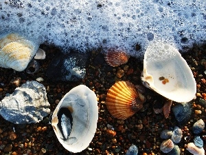 Shells, Pebble