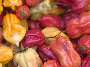 peppers, different, colors