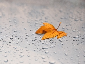 Autumn, drops, rain, leaf