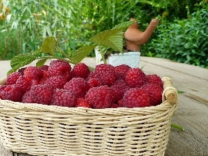 basket, red, raspberry, ripe