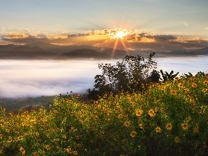 Flowers, Fog, sun, clouds, Mountains, rays, morning