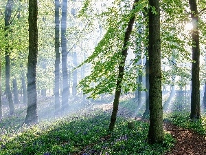 rays, sun, Path, Flowers, forest