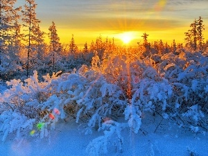 Bush, trees, rays, sun, snow, viewes