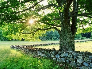 trees, Meadow, rays, sun, Stones, forest