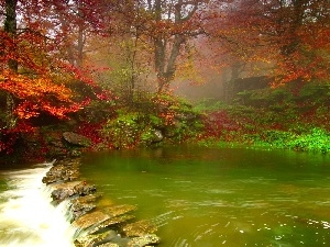 Red, Leaf, Green, water, River