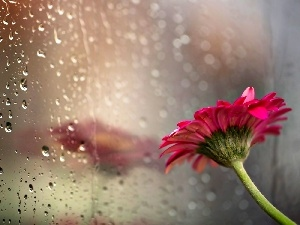reflection, drops, Gerbera, Glass, Colourfull Flowers