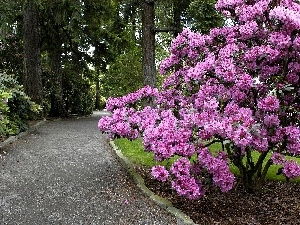 Park, Bush, rhododendron, alley