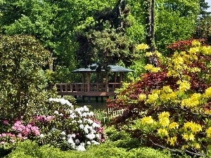 Park, color, Rhododendrons, arbour