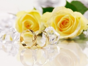 rings, roses, Golden