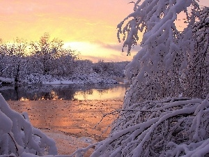 Bush, trees, River, rime, snow, viewes