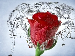 water, red hot, rose