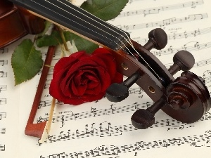 violin, Tunes, rose, bow