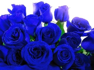 Blue, roses