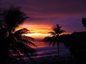 sea, Palms, west, sun, purple