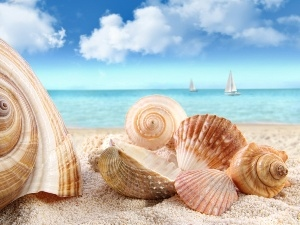 sea, sails, Shells