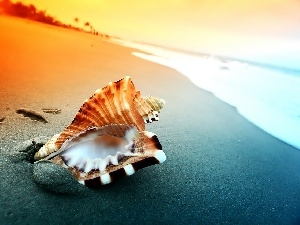 shell, sea, Beaches