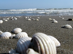 Beaches, Shells