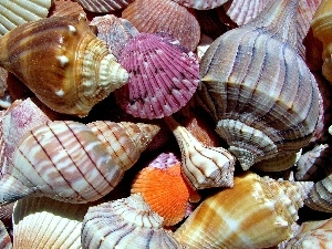 color, Shells