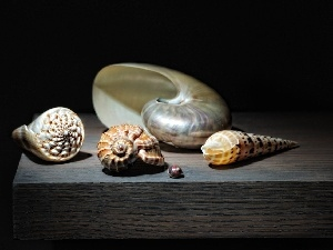 Shells, board, different