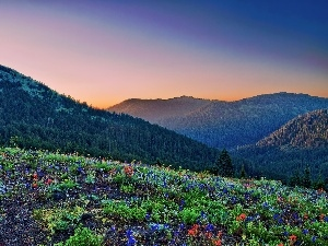 Mountains, Flowers, Sky, woods