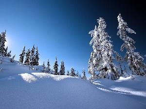 trees, snow, Sky, viewes