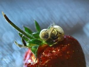 Strawberry, Two cars, Snails