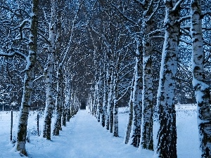 snow, winter, forest