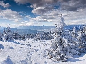 Mountains, winter, snow, Spruces