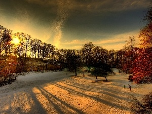 trees, Parks, snow, winter, viewes, color