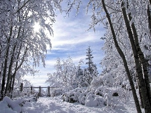 winter, viewes, snow, trees