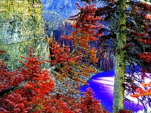 Spruces, Mountains, Autumn