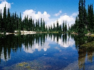 lake, Spruces