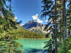 Mountains, lake, Spruces, forest