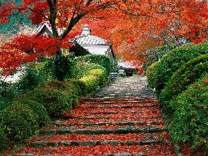 Stairs, Leaf, Japan, trees, house