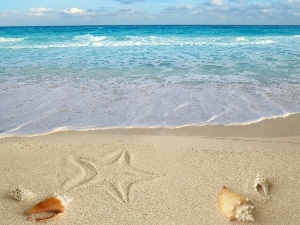 Beaches, Shells, starfish, Sand
