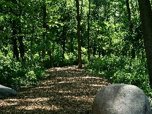 Stones, forest, Path