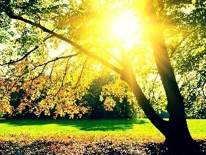 autumn, viewes, sun, trees