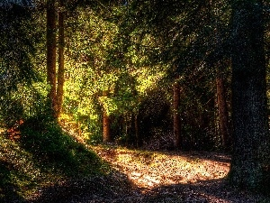 forest, rays, sun, Way