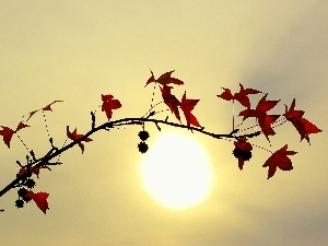 sun, twig, leaves