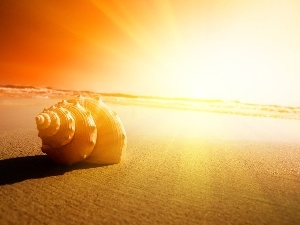 shell, west, sun, Beaches
