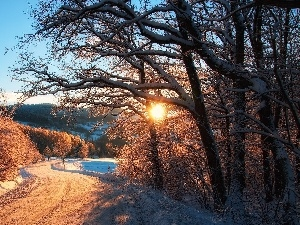 sun, snow, trees, viewes, Way