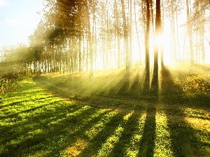 trees, rays, sun, viewes