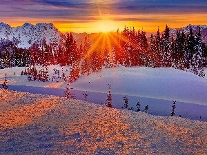 viewes, Mountains, sun, winter, west, trees